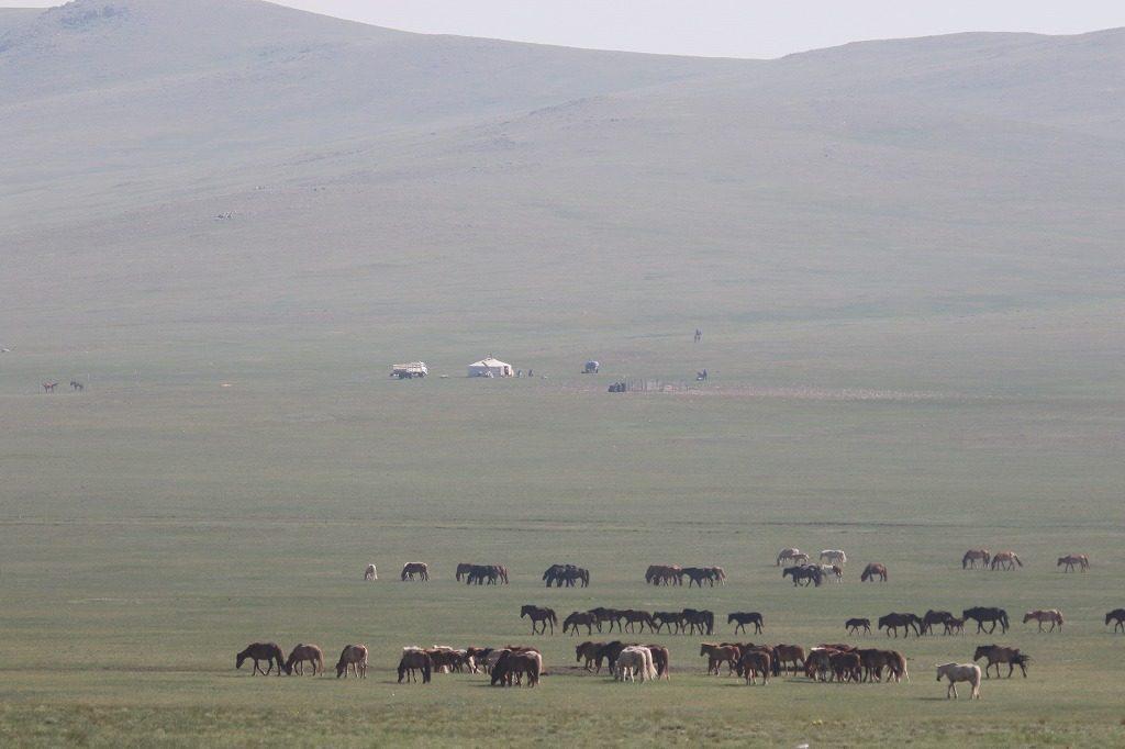 これがモンゴル草原