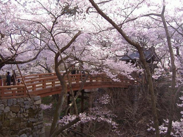 桜の季節の高遠城址