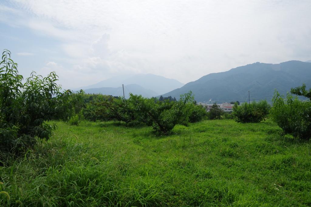 モモの畑と甲斐の山々